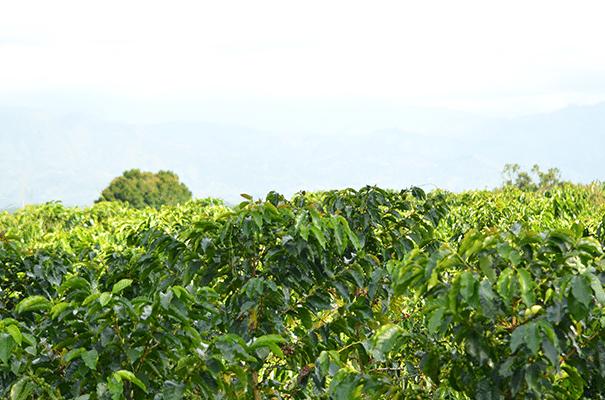 haciendabogota1