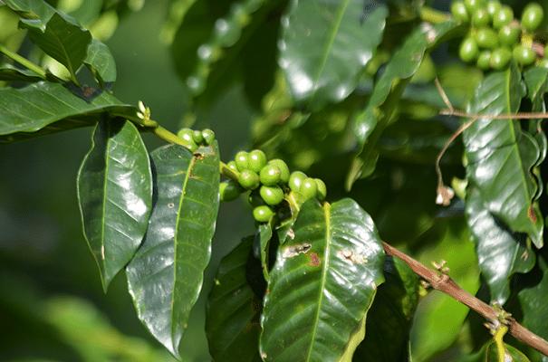 haciendabogota2